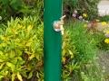 hydrant-bollard-goosefoot